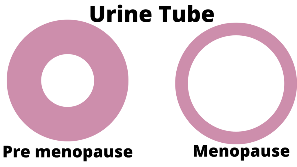 Urine tube with menopause