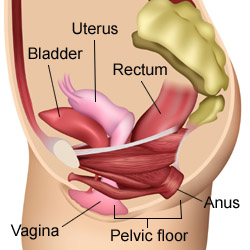 bladder exercises
